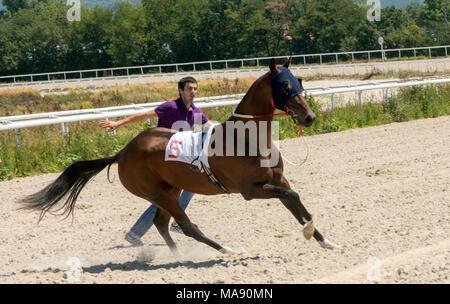 The horse threw the jockey at the start - Stock Photo