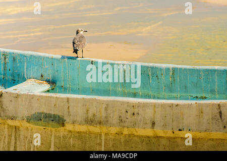Bird on a colorful and dirty boat on the beach in Holbox, Mexico - Stock Photo