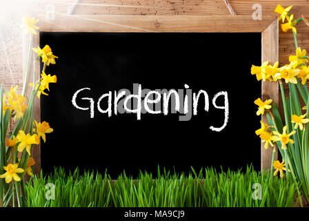 Blackboard With English Text Gardening. Spring Flowers Nacissus Or Daffodil With Grass, Easter Egg And Bunny. Rustic Aged Wooden Background. - Stock Photo