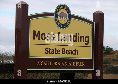 Moss Landing State Beach. Sea otters can frequently be found off the shores of Moss Landing State Beach. - Stock Photo