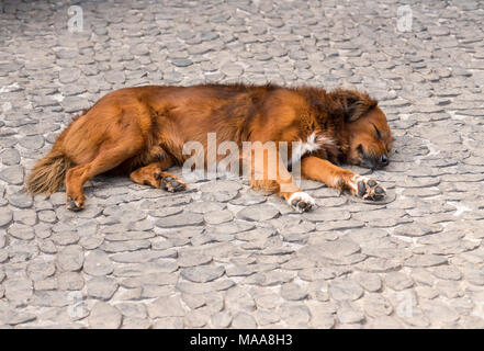 Dog fast asleep on cobbled payment or sidewalk - Stock Photo