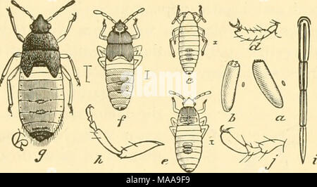 . Economic entomology for the farmer and fruit-grower . Stock Photo