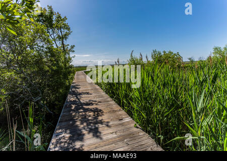 A coastal marshland vista frames a wooden boardwalk that bends and  reaches to a distant big blue sky horizon, Outer Banks, North Carolina. - Stock Photo