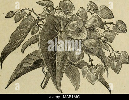 . Drumm Seed and Floral Co. : Fall, 1894-5 . - Stock Photo