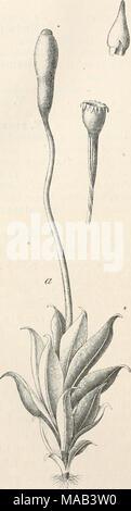 . Dr. L. Rabenhorst's Kryptogamen-Flora von Deutschland, Oesterreich und der Schweiz . - Stock Photo