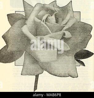 . Dreer's wholesale price list : bulbs for florists plants for florists flower seeds for florists . - Stock Photo