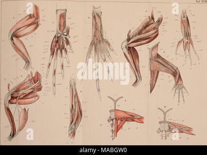 . Dr. H. G. Bronn's Klassen und Ordnungen der Amphibien wissenschaftlich dargestellt in Wort und Bild . - Stock Photo