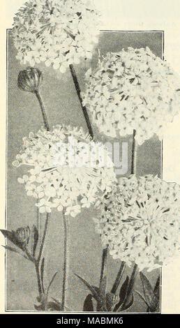 . Dreer's wholesale price list : flower seeds plants and bulbs vegetable seeds sundries for florists . - Stock Photo