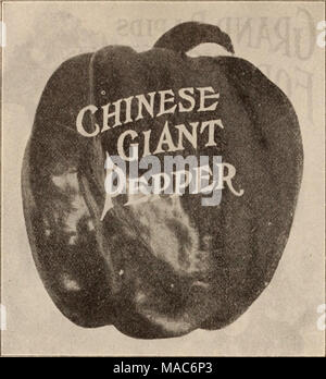 . Dreer's wholesale price list / Henry A. Dreer. . PEPPER. oz. >4=ib. Lb. Chinese Giant. '/2-0Z., 20 cts.. 35 $125 $4 00 Hot Bell 30 80 3 00 Giant Crimson 35 1 25 4 00 Large Bell or Bull Nose 20 60 2 00 Lartce Sweet Spanish 20 60 2 00 Ruby King 25 75 2 25 Long Red Cayenne 20 60 2 00 PEAS. // by mail, add 15 cetits per ijiiavt By Express or Freight. Ot. 4 Ots. Pk. Bush. Dreer's Extra Early Electric .... 30 $1 00 $1 60 $6 40 Oreer's Eureka Extra Early 30 1 00 1 60 6 40 Gradus, or Prosperity 35 1 20 2 25 9 00 Thomas Laxton 35 1 20 2 25 9 00 Early Morn 35 1 20 2 25 9 00 Alaska 30 1 00 1 60 6 40 - Stock Photo