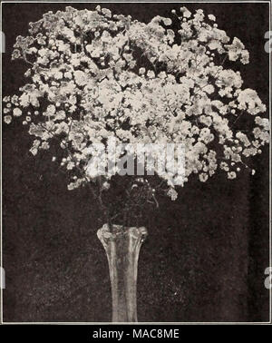 . Dreer's midsummer list 1929 . Double-flowering Gypsophila Gaill.rdl Gr-i^ndiflora GeUm (Avens) PER PKT. 2541 Atrosanguineum Fl. PI. Beautiful hardy peren- nial, bearing profusely large, showy double dark- crimson flowers all through the summer; an elegant flower for bouquets;'18 inches, j oz., 50 cts SO 10 2542 Mrs. Bradshaw. Large double brilliant orange scarlet; in flower throughout the entire summer 15 2543 Lady Stratheden. New double-flowering golden-yellow. 5 pkts., Sl.OO 25 Grevillea (suk oak) 2681 Robusta. A very beautiful and graceful deco- rative plant with fern-like foliage; exce - Stock Photo