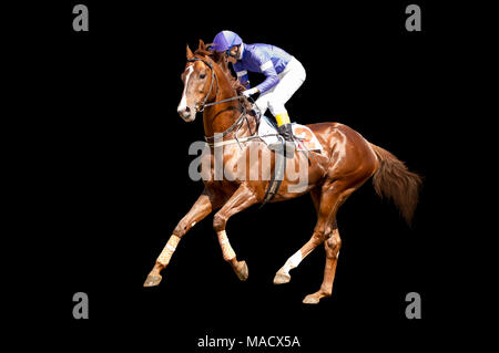 Jokey on a thoroughbred horse in blue closes runs isolated on black background - Stock Photo