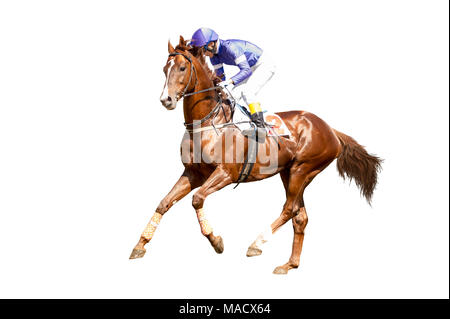 Jokey on a thoroughbred horse in blue closes runs isolated on white background - Stock Photo
