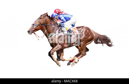 Two Jokey on a thoroughbred horse in blue closes runs isolated on white background - Stock Photo