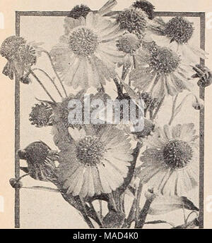 . Dreer's wholesale catalog for florists and market gardeners : autumn 1940 edition . - Stock Photo