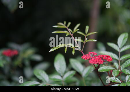 A tiny tree branch with tiny red flowers - Stock Photo