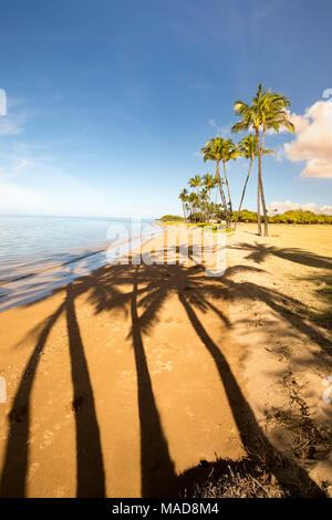 Palm trees and their shadowson the beach at One Ali'i Park on the south shore of the island of Molokai, Hawaii, USA. - Stock Photo