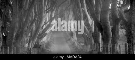 The Dark Hedges. Rural Beech tree lined road in Ireland. - Stock Photo