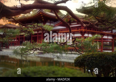 Jodo-shiki garden with a pond in front of Phoenix Hall, Hoodo, of Byodo-in in a beautiful sunrise scenery with pine tree branches in the foreground, B - Stock Photo