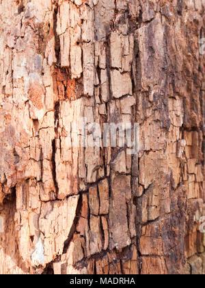 close up grooved cut split cracked texture on tree trunk bark macro; essex; england; uk - Stock Photo