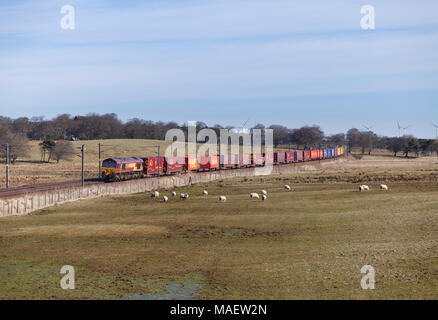 A DB cargo Class 66 locomotive passes Auchengray (between Carstairs and Edinburgh) with a  Tees Dock - Mossend intermodal container freight train - Stock Photo