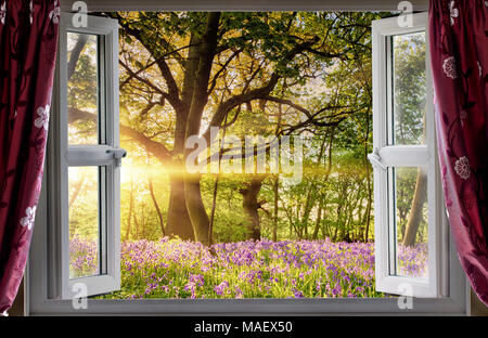 Window open onto bluebell forest woodland sunrise in the morning light. Fresh landscape view from indoors. - Stock Photo