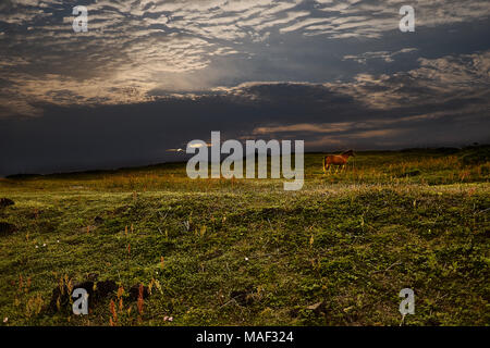 A horse in a scenic sunset view of Seopjikoji Hill of Jeju Island, South Korea, with grass field and dark sky with clouds of beautiful yellowish glow. - Stock Photo