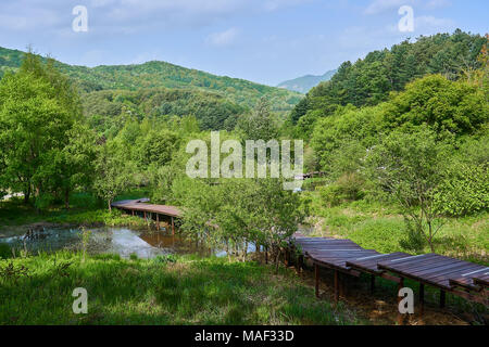 Wooden pathway in Pyunggang Botanical Garden in Pocheon, South Korea with a view of blue sky with clouds and lots of trees and swamp - Stock Photo
