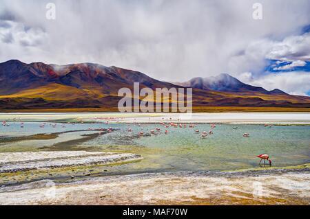 Altiplano Lagoon in Bolivia, Southamerica