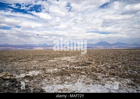 Salar de Atacama, Antofagasta, Chile, southamerica - Stock Photo