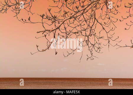 Leafless tree over sea with cement wall texture Hue filter - Stock Photo