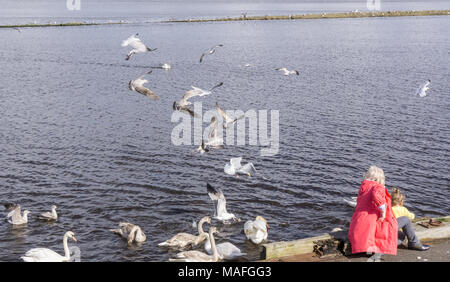 Irvine, Scotland, UK - March 29, 2018: Mother and daughter feeding the gulls down by the harbour side in Irvine both were soon engulved by hungry seab - Stock Photo