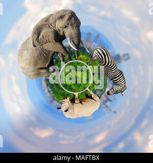 360 degree view of Panoramic view from elephant, zebra, rhino with the city of on the background - Stock Photo