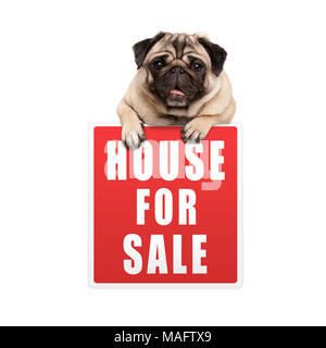 cute pug puppy dog hanging with paws on red house for sale sign, isolated on white background - Stock Photo