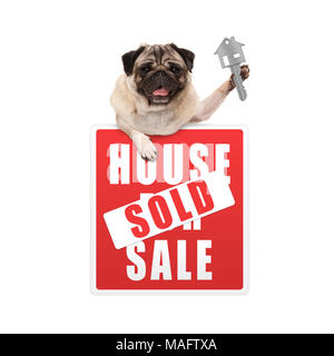 happy pug puppy dog hanging with paws on red house sold sign holding up house key, isolated on white background - Stock Photo