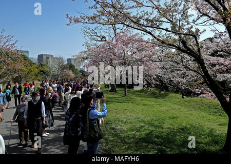 Tourists view cherry blossoms in East Garden of Imperial Palace, Tokyo, Japan - Stock Photo