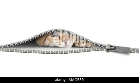 funny cat behind open zipper isolated on white - Stock Photo