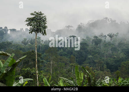 Morning view in Amazon - Stock Photo