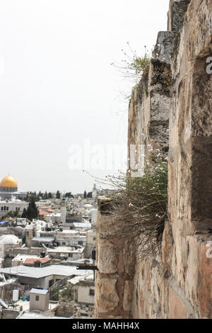 Distant and half hidden view of the city of Jerusalem with a well visible Temple mount and its holy Mosque - Stock Photo