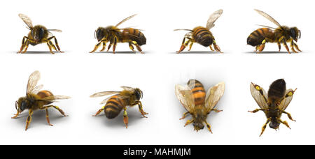 Bee renders set from different angles on a white. 3D illustration - Stock Photo