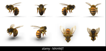 insect honey bee. Renders set from different angles on a white. 3D illustration - Stock Photo