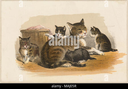 Cats and Kittens by Boston Public Library Stock Photo