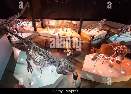 Houston Museum Of Natural Science Paleontology Hall