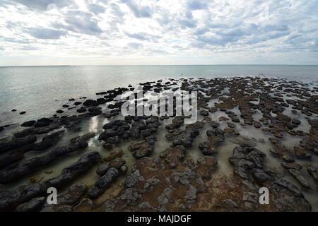 Stromatolites. Hamelin Pool marine nature reserve. Shark Bay. Western Australia - Stock Photo