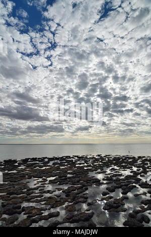 Stromatolites in Hamelin Pool marine nature reserve. Shark Bay. Western Australia - Stock Photo