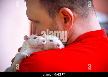 Two home of the albino rat sitting on the shoulder of a man. - Stock Photo
