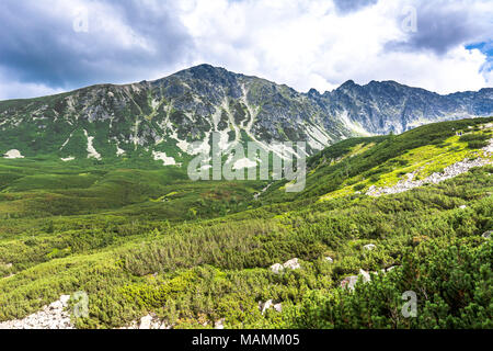 Evergreen forest in mountains, panoramic vista of hills and green valley - Stock Photo
