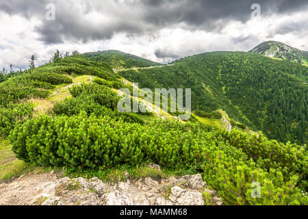 Green mountains landscape, hills covered forest - Stock Photo