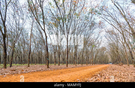 Path rubber season change leaves with trees line up dirt road leading into down at horizon so beautiful. Every year when the autumn leaves change - Stock Photo
