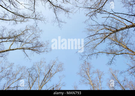 Branch against the blue sky - Stock Photo