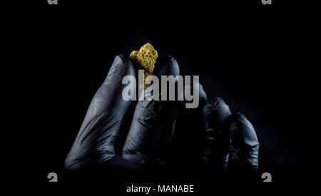 A hand with a black latex glove holding a fresh nug. Black background - Stock Photo